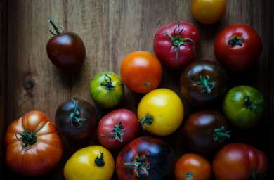 Ça y est, les tomates sont arrivées!
